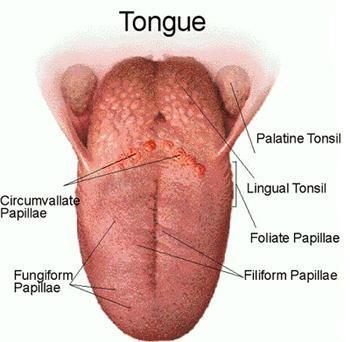 Bumps On Tongue
